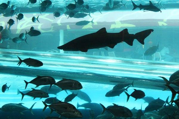GN Shark Tank